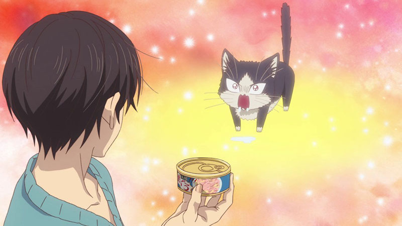 Haru the cat excited when she sees food